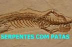 SERPENTES COM PATAS